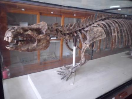 هيكل عظمى لأحد الديناصورات