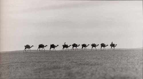 قافلة تجارية تسير فى صحراء المعادى